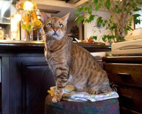 和蘭豆・看板猫のレオさん