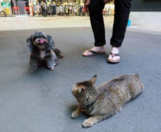 八幡屋商店街の地域猫3