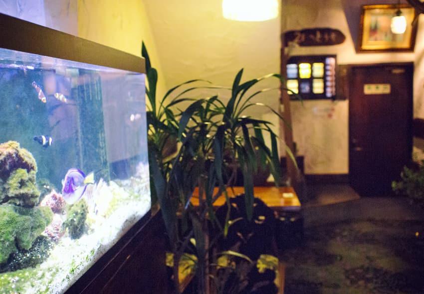 琥珀屋珈琲店の水槽