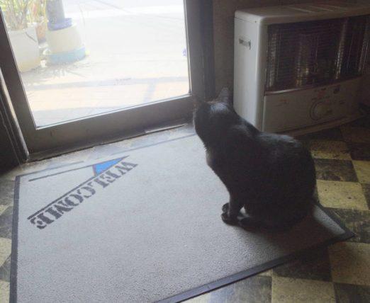 お客さんを待つ黒猫