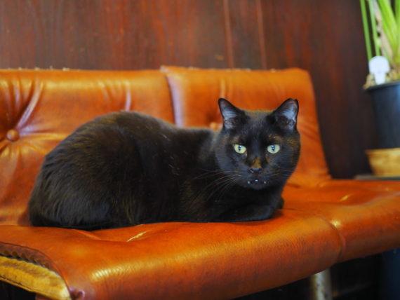 椅子の上の黒猫