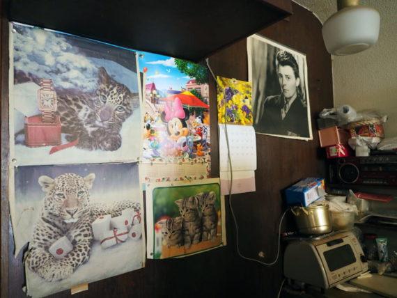 千福珈琲店・ネコ科の動物の写真